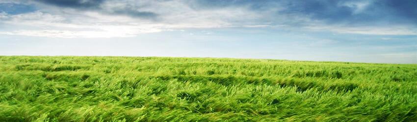 zelene pole