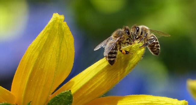 Zakázané tri látky, ktoré ohrozujú naše včely