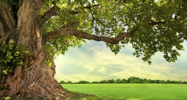 strom a horučavy