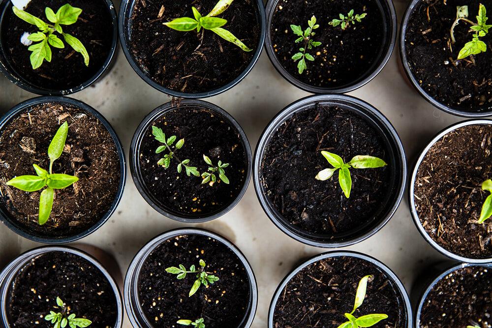 Ako pripraviť vaše rastliny a záhradu na zimné mesiace