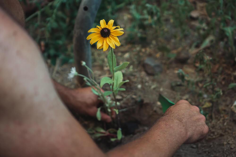 úprava pôdy pri rastline